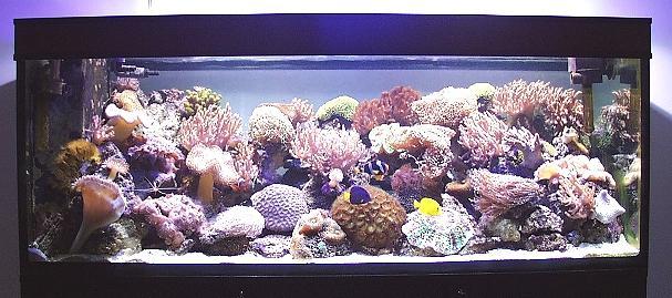 L 39 acquario di matteo trevisani - Pesci e acquario a letto ...